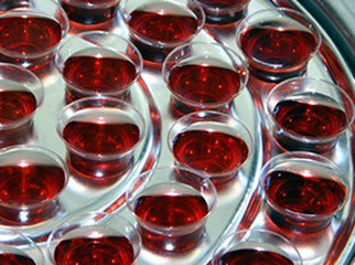 Is Holy Communion for everyone?